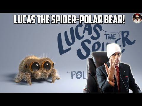 LUCAS THE SPIDER- Polar Bear REACTION and Commentary!