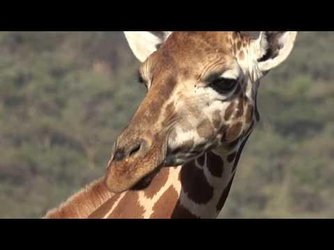 Safari Lake Nakuru