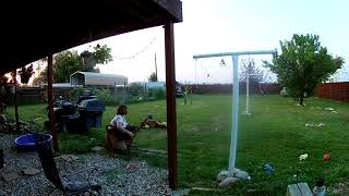 Pups playing in the yard