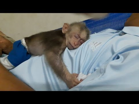 Baby Monkey Doo And Daddy / Lovely Sleeping Compilation - Funny Animals