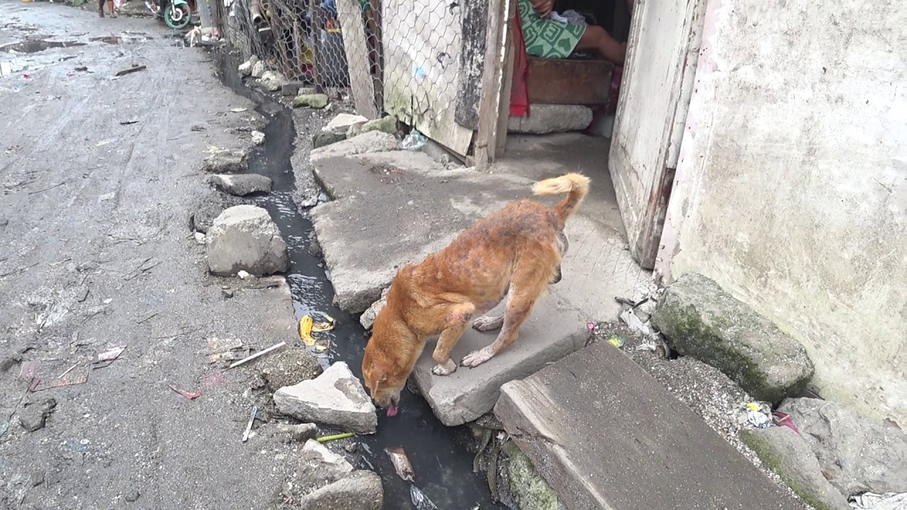 Drinking Dirty Water Sick Dog - YouTube