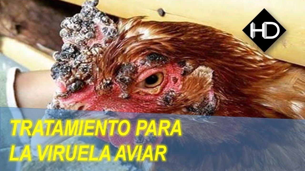 la piel de gallina tiene cura