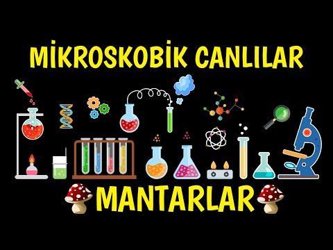 MİKROSKOBİK CANLILAR VE MANTARLAR...