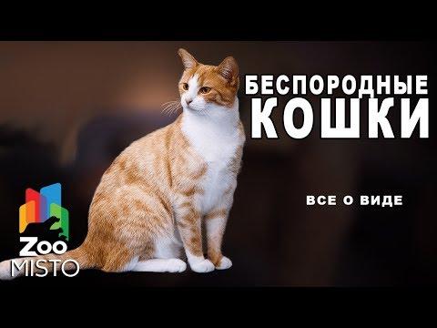 Беспородные кошки - Все о виде кошек | Беспородные кошки