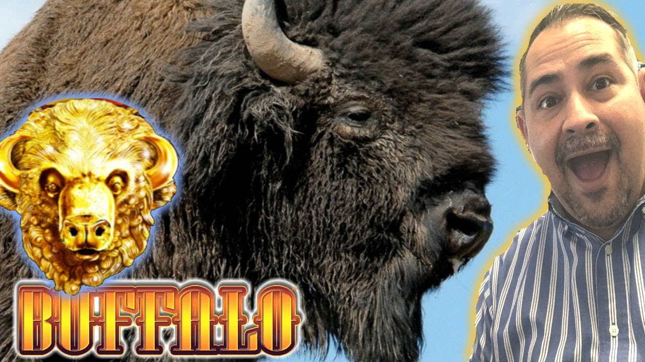 Play Buffalo Gold Online
