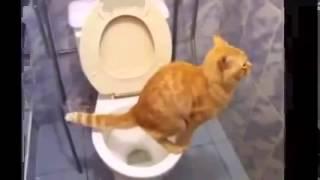 Кот который сам ходит на унитаз )