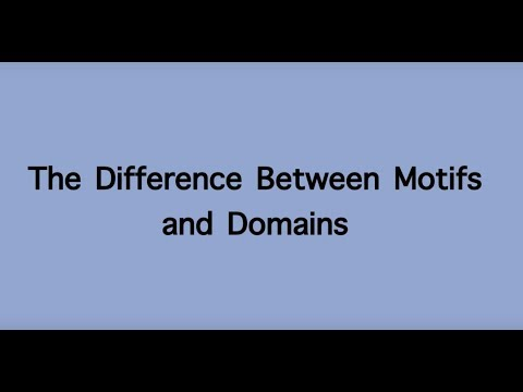 The Difference between Motifs and Domains of Polypeptide Chains