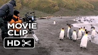 Adventures Of The Penguin King Movie CLIP - Directing Penguins (2013) - Nature Documentary HD