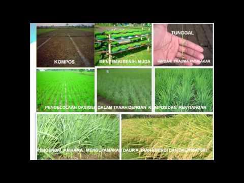 Introduksi SRI (System of Rice Intensification)
