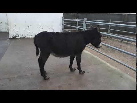 16 Donkeys rescued by The Donkey Sanctuary in Mayo, Ireland