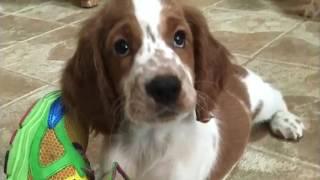 24 hour emergency vet houston tx - animal hospital-puppy-animal doctor