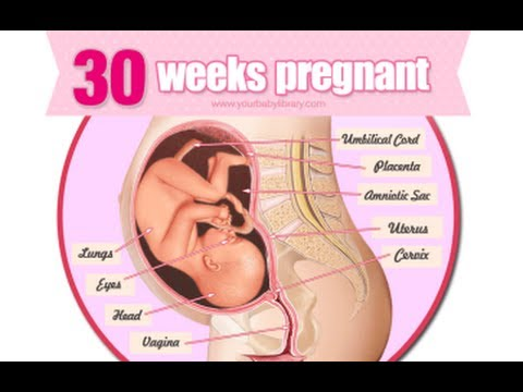 Image result for 30 weeks pregnant