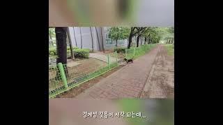 [겨울일상]# 110 닥스훈트○● 짖는것도 품위있게  …