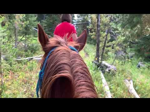 Bighorn Ride Yellowstone National Park
