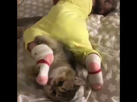 cats licking babies feet clean