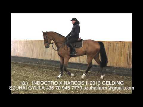 51 JUMPING HORSES FOR SALE