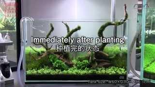 [ada View] In Conjunction With Aj224  60cm Tank  Standard Stem Plants Layout