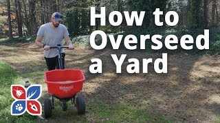 Do My Own Lawn Care - How to Overseed a Yard