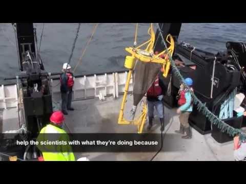 Marine Technician