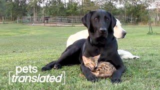 The Ultimate Pet BFFs | Pets Translated