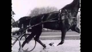 Том 10 самые знаменитые лошади в мире!
