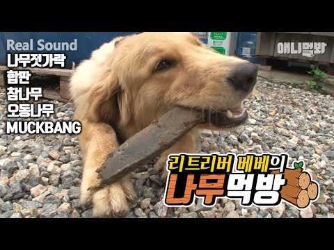 Retreiver Dog Bebe Oak Tree MUKBANG