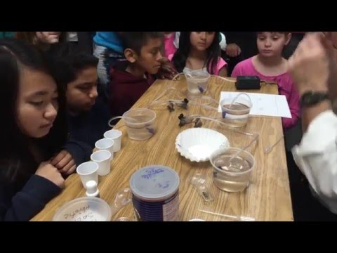 Rick Crosslin Science - Biotic Abiotic Factors Ecosystems Grade 6 Westlake Elementary