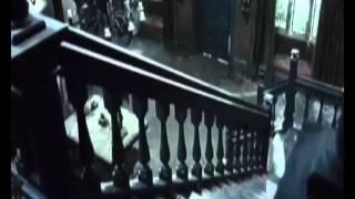 прожекторперисхилтон женщина в черном