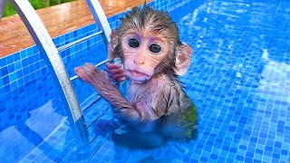 Baby monkey Bon Bon playing at the pool with puppy and duckling in the garden