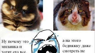 грустное видео до слез о животных
