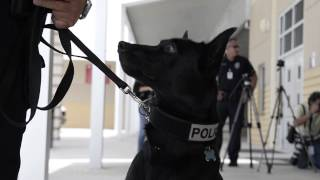 Palm Beach Police Dogs In Training