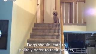 Dog Should Politely Defer To Owners