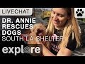 Dr. Annie Harvilicz Saves Dogs From The South LA Shelter - Live Chat