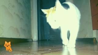 Что делают кошки ночью