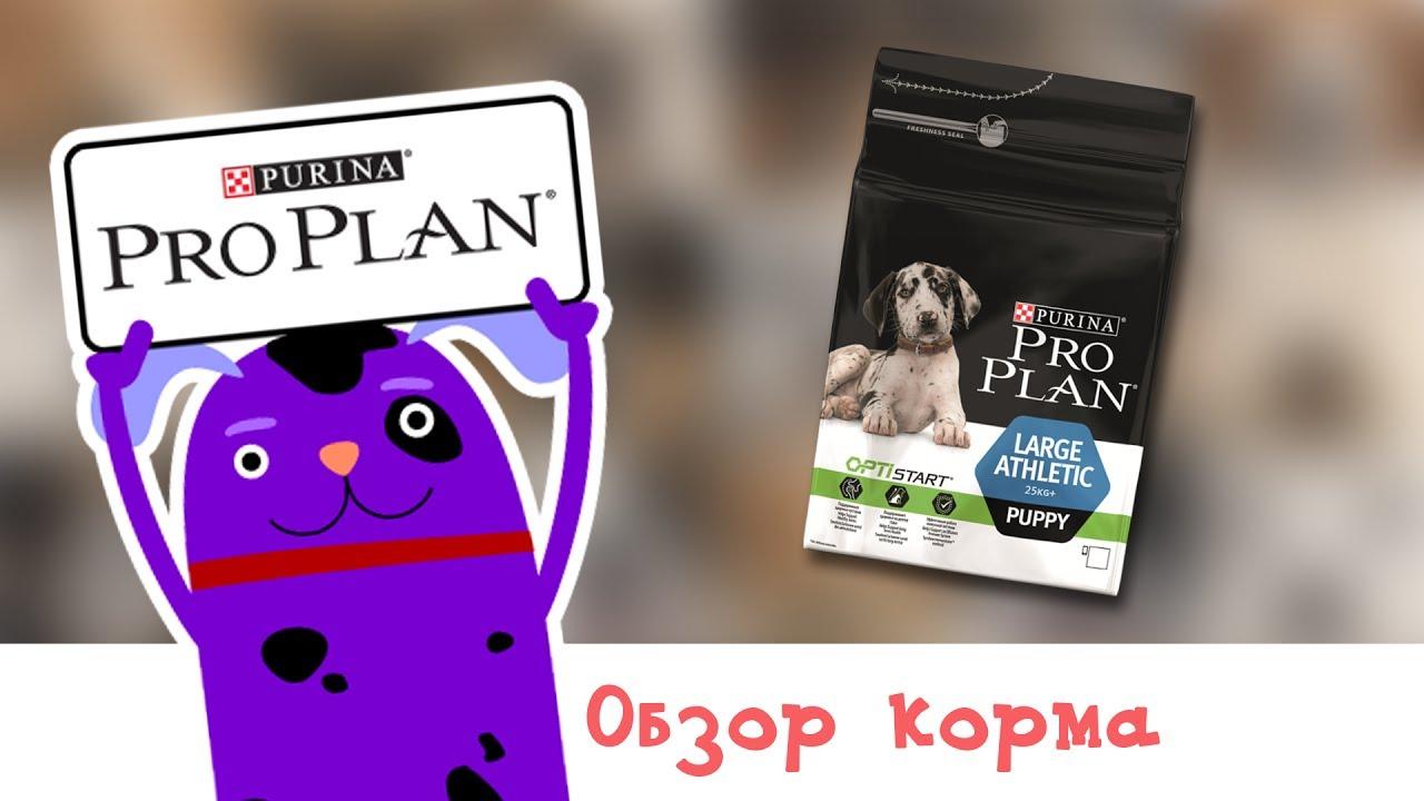 Реклама Пурина Ван - Здоровый питомец сегодня и завтра - YouTube