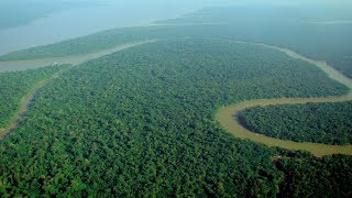 What You NEED To Know About the Amazon Rainforest