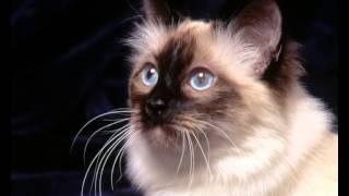 Нутрам корм для кошек отзывы