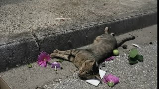 Cat badly injured left to die at the side of the road