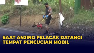 Saat Anjing Pelacak Datangi Tempat Pencucian Mobil terkait Kasus Pembunuhan Ibu-Anak Subang