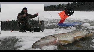 Лесными ТРОПАМИ ЗА ЩУКОЙ Жерлицы 2019 2020 ОТКРЫТО Pike fishing in winter