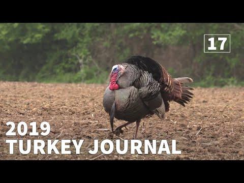BIG KENTUCKY GOBBLER...2019 KENTUCKY TURKEY HUNTING - 2019 Turkey Journal | Episode #17 |