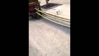 Jumping Bichon Maltese