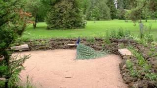 Wörlitzer Park - paradiesische Idylle - 2D-Fassung
