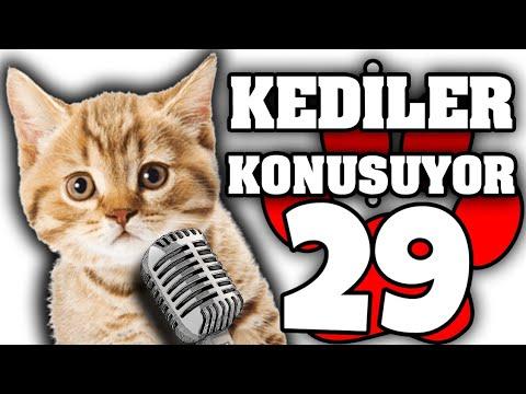Konuşan Pisiler #29 - En Komik Kedi ları