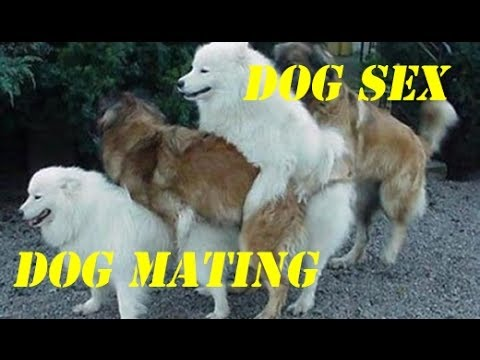Funny Dogs mating group