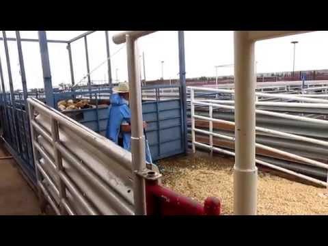 Columbus Cattle Auction Sept 2015