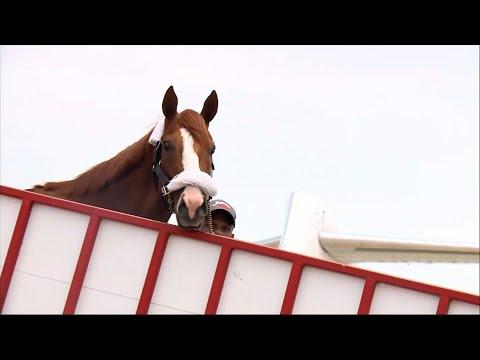 Triple Crown Winner Justify Arrives Back in Kentucky