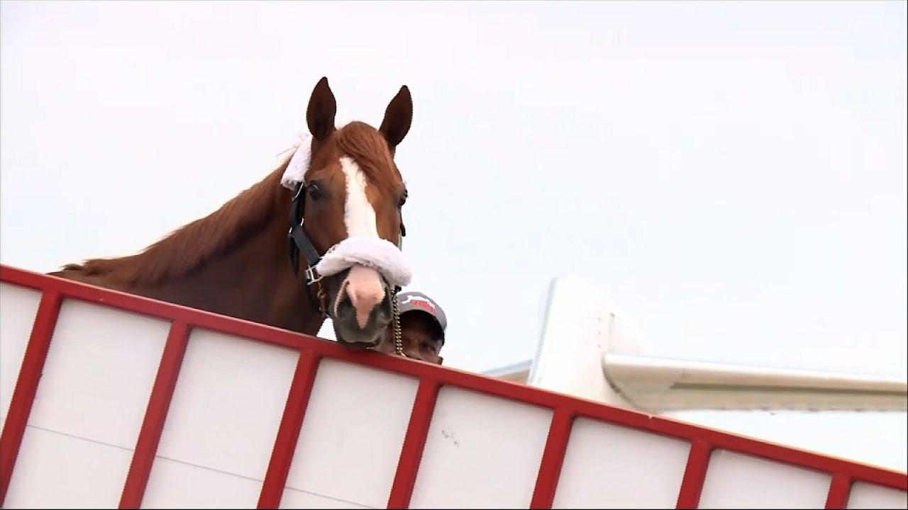 6a28da942b2f Triple Crown Winner Justify Arrives Back in Kentucky - YouTube
