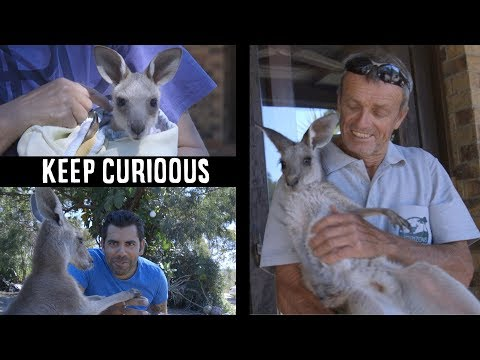 i-have-met-the-couple-with-200-kangaroos!!!-australia---keep-curioous