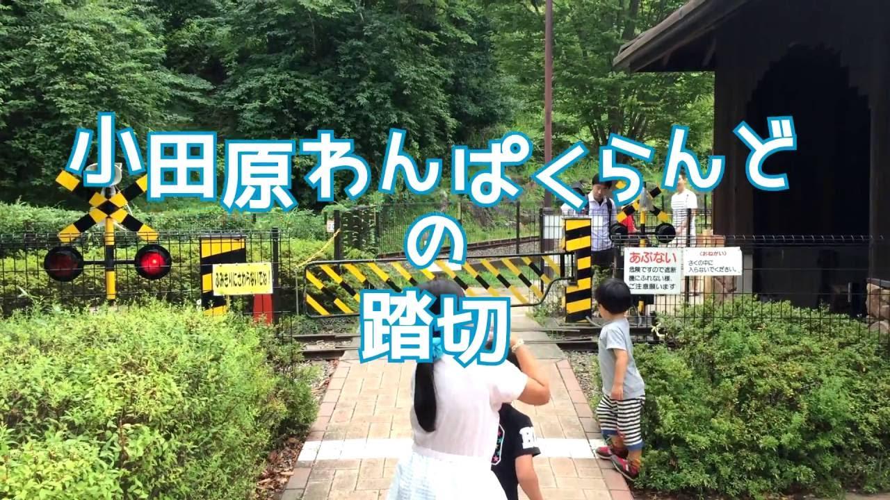 らんど 公園 こども の 小田原 森 わんぱく